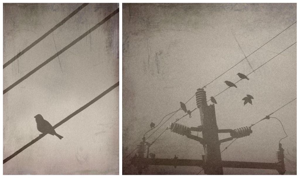 birdonawire1.jpg