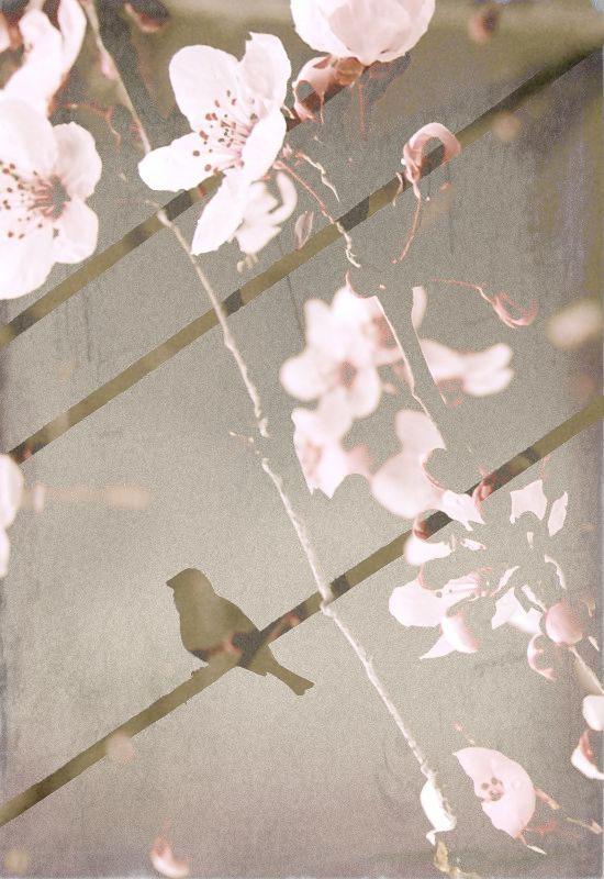 layered-blossombird22