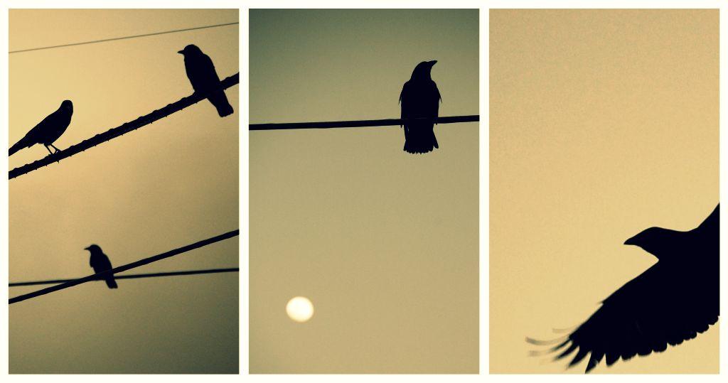 twlightbirds.jpg