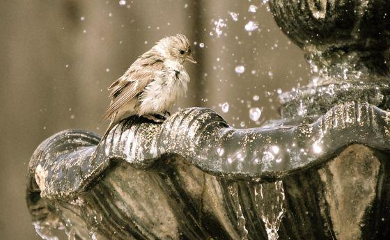 bird-bath-1