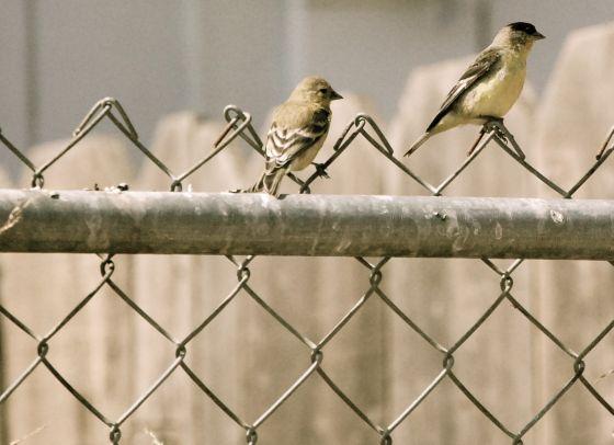 bird-bath-4