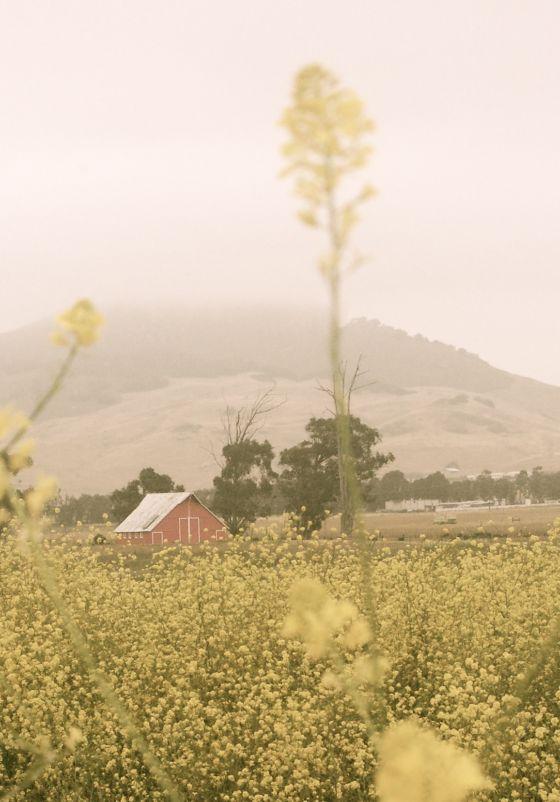 little-red-barn