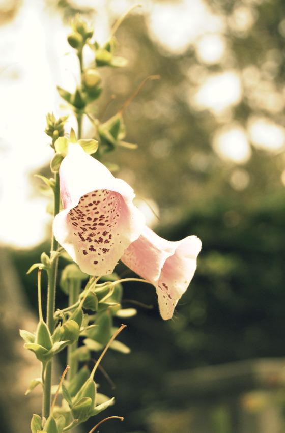 garden-bells