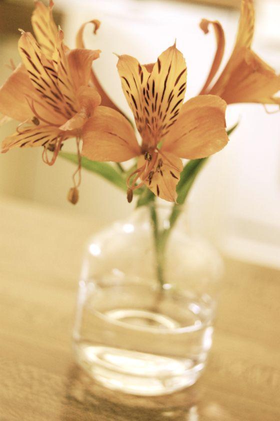 peruvian-lily