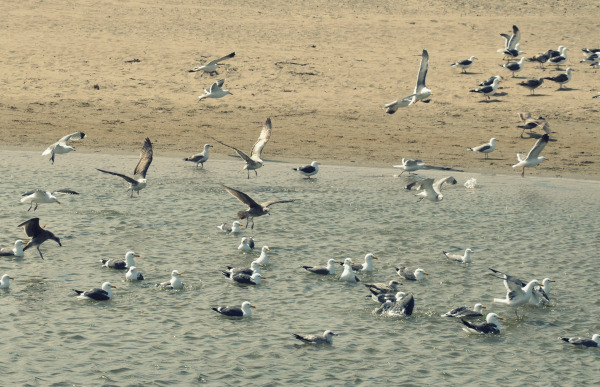 flock-of-seagulls1-custom-hand-stamped-jewelry
