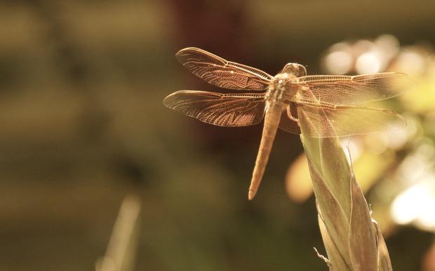 dragonfly-custom-hand-stamped-jewelry