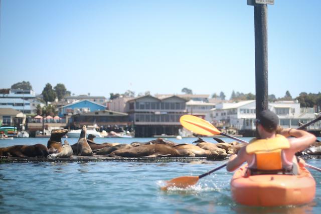 kayaking as a family lisa leonard-13