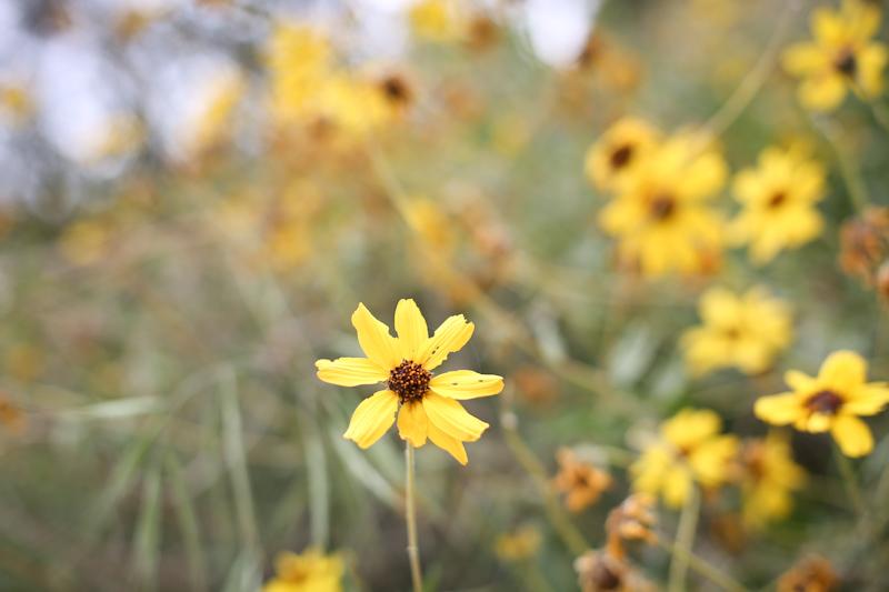 wildflowers lisa leonard-05