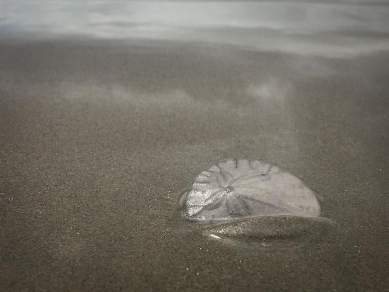 hello sand dollar beach lisa leonard-01