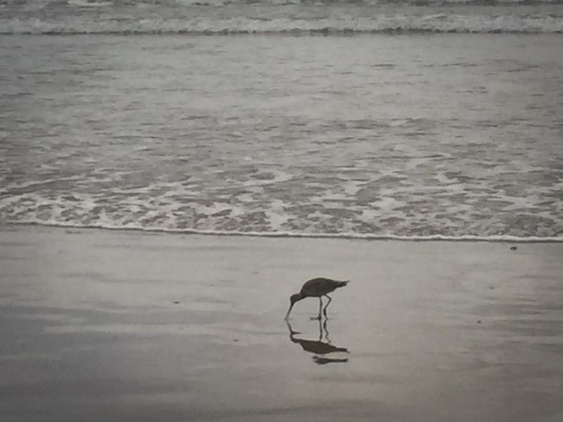 hello sand dollar beach lisa leonard-02