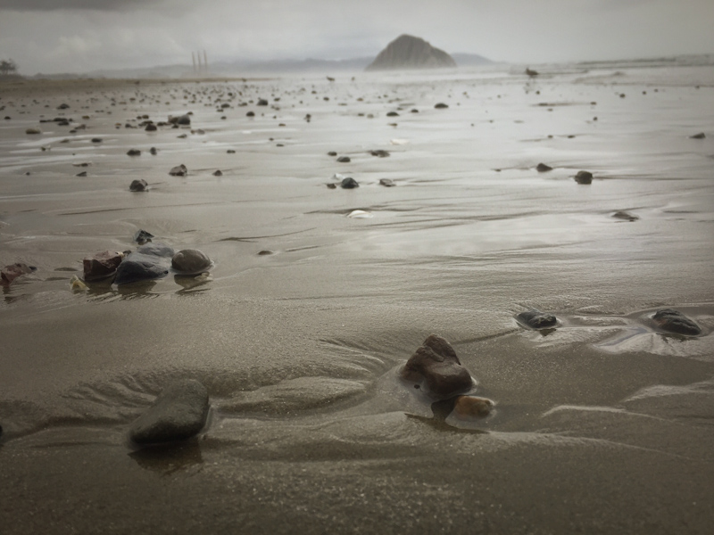 hello sand dollar beach lisa leonard-05
