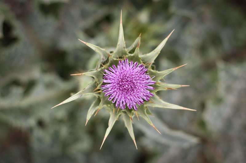 wildflowers lisa leonard-02