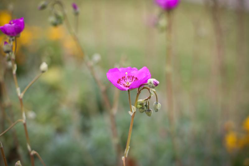 wildflowers lisa leonard-07